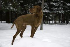 Slå en hund poserar Royaltyfri Bild