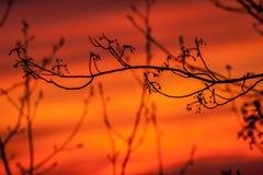 Slå ut trädet i början av våren fotografering för bildbyråer