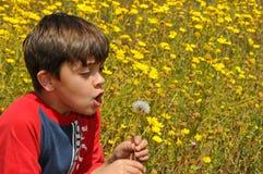 slående barnmaskros Fotografering för Bildbyråer
