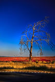 slående tree arkivfoto