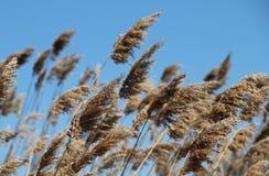 slående wind Arkivfoto