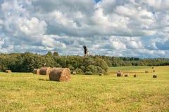 Slågen in rundabrunt Hay Bales Field lantligt område Landskap Vektorillustrationen (EPS 10) + suppleanten sparar (CDR 10) Royaltyfri Fotografi