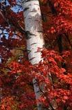 slågen in tree arkivfoto