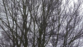 slågen treeswind lager videofilmer