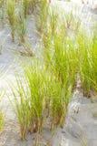 slågen wind för sand för gräs för fokus för djupdynfält grund Royaltyfri Foto