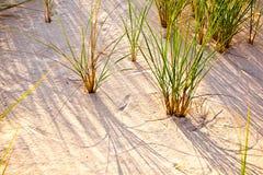 slågen wind för sand för gräs för fokus för djupdynfält grund Arkivfoton