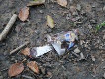 Slåget in i en stång i skogen på slingan Royaltyfria Foton