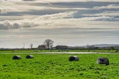 Slågna in baler av hö på en engelsk lantgård Arkivbilder