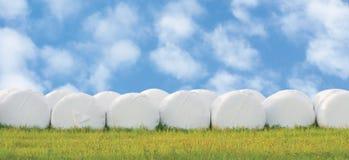Slågna in staplade ensilagebaler ror, isolerade runda vita hörullar för den plast- filmen, panorama för haylagebuntrader, horison Royaltyfria Foton