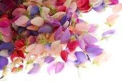 slår ut den färgrika blomman arkivbild