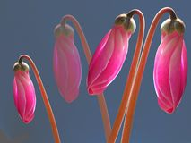 slår ut lysande pink Royaltyfri Foto