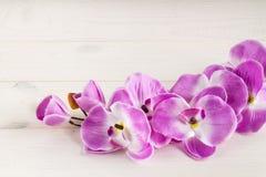 slår ut orchidpink greeting lyckligt nytt år för 2007 kort Royaltyfria Foton
