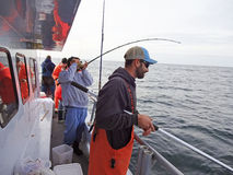 Slåss blåfisken arkivbilder