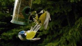 slåss för fåglar Royaltyfri Bild