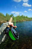 slåss fisk Royaltyfria Foton