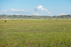 Slåtteräng med bakgrund av berg Östlig Kasakhstan region Arkivfoton