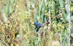 Slösa fågeln Royaltyfri Foto