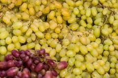 Slösar mörka grapes/för sund bakgrund för fruktrött vindruvor gra Royaltyfria Foton