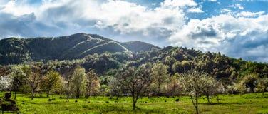 Sl?ende panorama- landskap med gr?nt gr?s, kullar och tr?d, soligt v?der, molnig himmel royaltyfria bilder