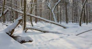 sl?gna in h?ftig sn?stormsnowtrees arkivfoto