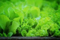 Sla het groeien in milieuvriendelijke tuin Stock Fotografie