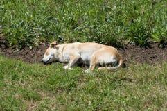 Slaap enige verdwaalde hond in het gras royalty-vrije stock afbeelding