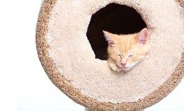 Slaap Ginger Cat royalty-vrije stock foto's