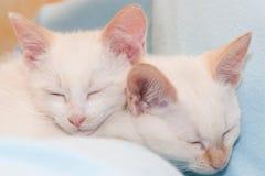 In slaap katten Stock Foto