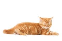 In slaap katten van weinig Gember de Britse shorthair Royalty-vrije Stock Foto's