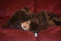 In slaap met zijn beer Stock Fotografie