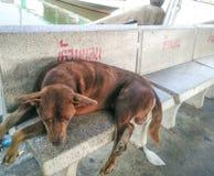 Slaap niet en een hond Royalty-vrije Stock Afbeelding