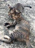 Slaap van de paar de gestreepte kat op de vloer en het zoeken van iets royalty-vrije stock afbeelding