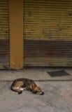 Slaap Verdwaalde hond Royalty-vrije Stock Foto's