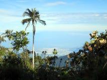 Slaapboom (Palme)/Schlafenwachs-Palme; Santa Marta Parakeet, Kapital lizenzfreies stockfoto