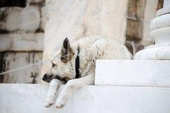 Slaaphond stock afbeeldingen