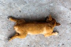 Slaaphond in de middag stock foto