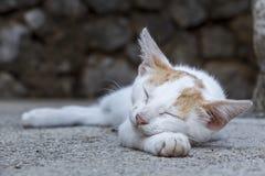 Slaapkat, Catnap royalty-vrije stock foto's