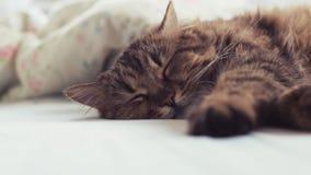Slaapkat in het bed stock videobeelden