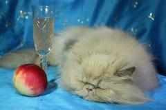 Slaapkat met een glas van wijn en perzik op een blauwe achtergrond Stock Afbeeldingen
