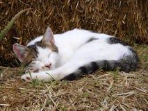 Slaapkat op baal van stro Royalty-vrije Stock Foto's