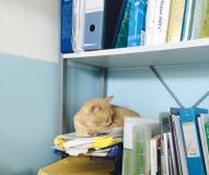 Slaapkat in veterinaire kliniek Stock Foto's