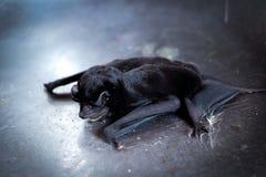 Slaapknuppel Stock Afbeeldingen