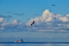 Slaapleeuw, San Cristobal, de Galapagos stock fotografie