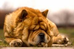 Slaaptijd Stock Foto's