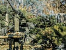 Slaaptijger in de wildernis royalty-vrije stock afbeeldingen