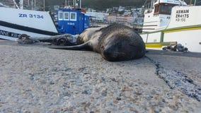 Slaapverbinding - kalk baaihaven, Kaapstad royalty-vrije stock fotografie