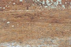 Gammal slab med lavar Royaltyfria Foton
