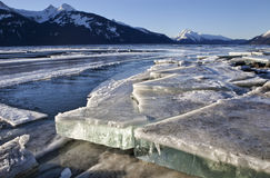 Slabs of ice in the Chilkat Estuary Royalty Free Stock Images