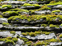 Slabs and moss. Detail of the tiles of a roof covered with moss, in Beynac-et-Cazenac (Dordogne Royalty Free Stock Photo