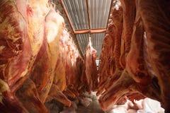 slachthuiskoeien, die op haken in de koude helft koeien hangen Stock Fotografie